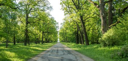 Managing Oak forests